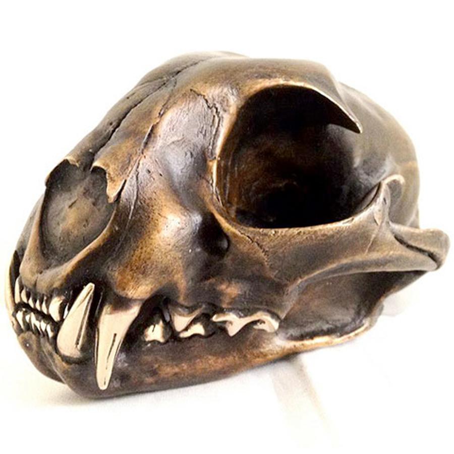 Bronzadermy bobcat skull